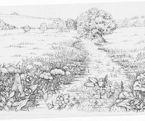 wetland chalk meadow